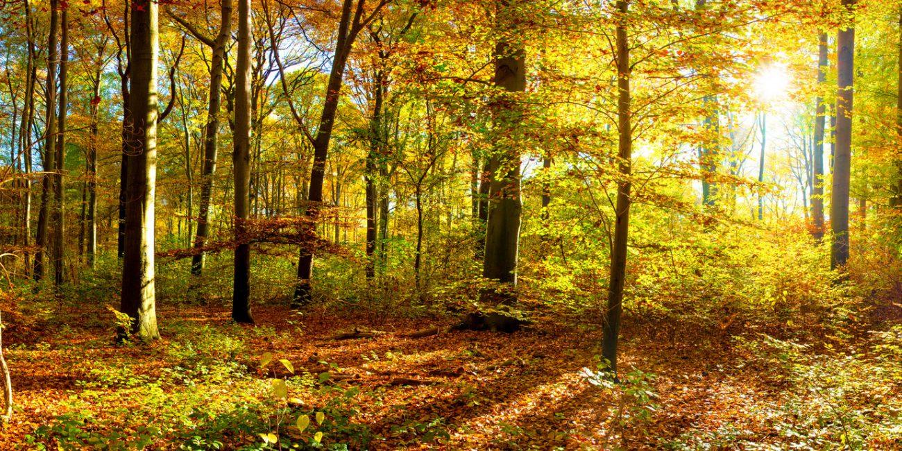 Verbindung zur Natur mit Julia Schregel - Probieren Sie es einmal mit Breath Walk, Nordic Walking, einem Spaziergang im Wald oder in den Bergen - Verbindung zur Natur & Yogatherapie bei Ängsten, Burnout & chronischer Stressbelastung mit Lifechangingyoga by Julia Schregel in Zürich - Meilen. Ganzheitliche Yoga Kurse, Kundalini, Yogatherapie, Gesundheit & Ernährung